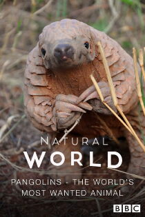 The World's Most Wanted Animal Sehen Kostenlos